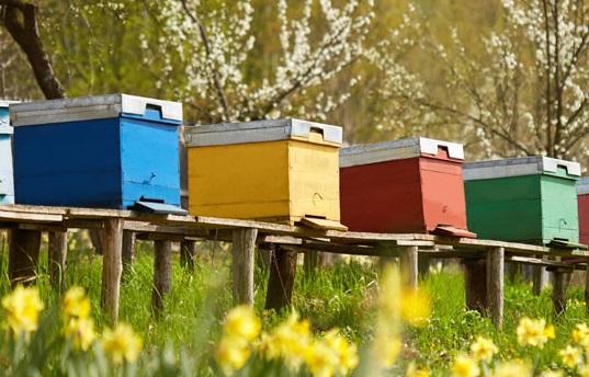miele per uso industriale e settore dolciario